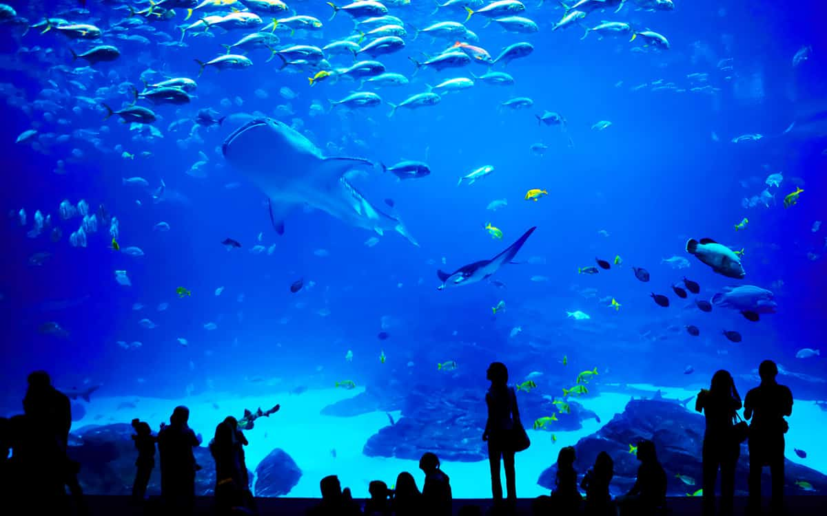 grand-aquarium