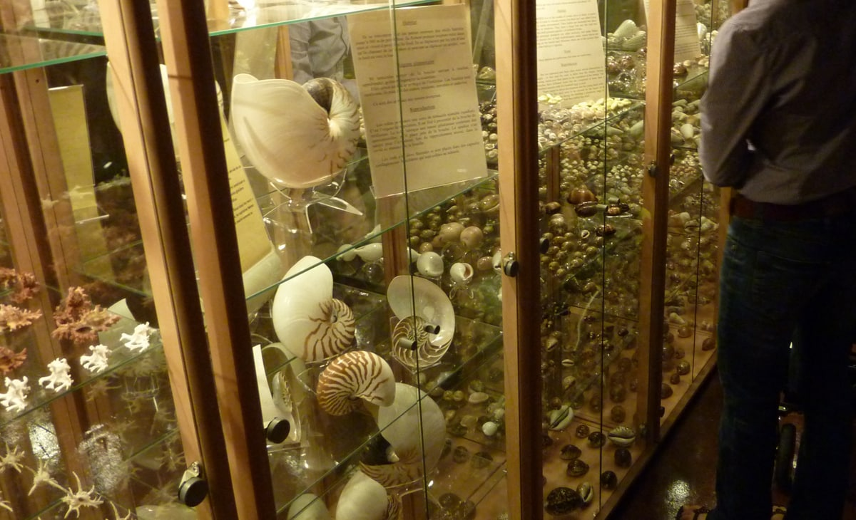 musee coquillage